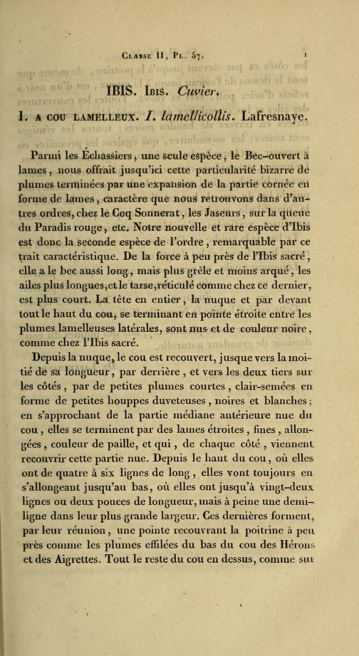 Ibis. Ibis. Cuvier. I. a Cou Lamelleux. I. lamellicollis
