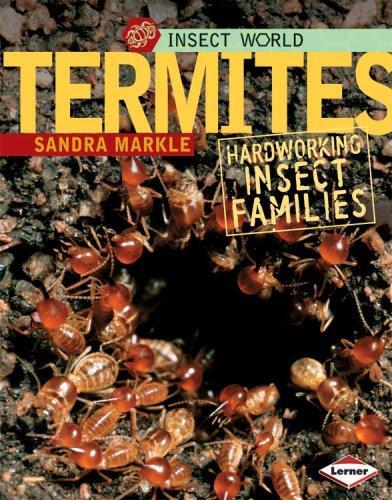 Download Termites
