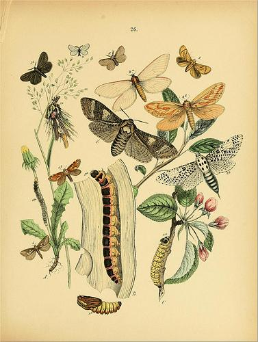 European butterflies and moths