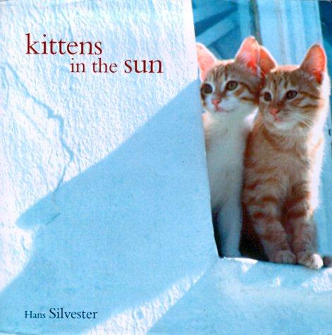 Download Kittens in the Sun